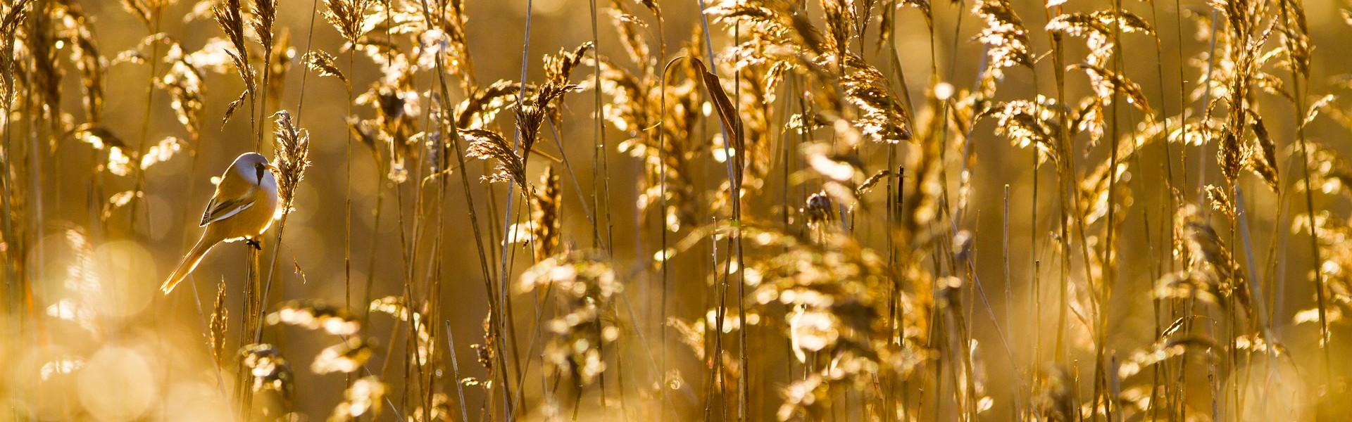 Christian Höfs Naturfotografie